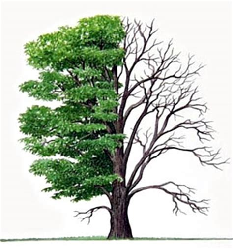 tree half guard your above all else for it determines the