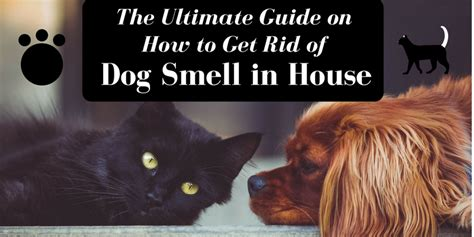 dog smell in the house ultimate guide on how to get rid of dog smell in house