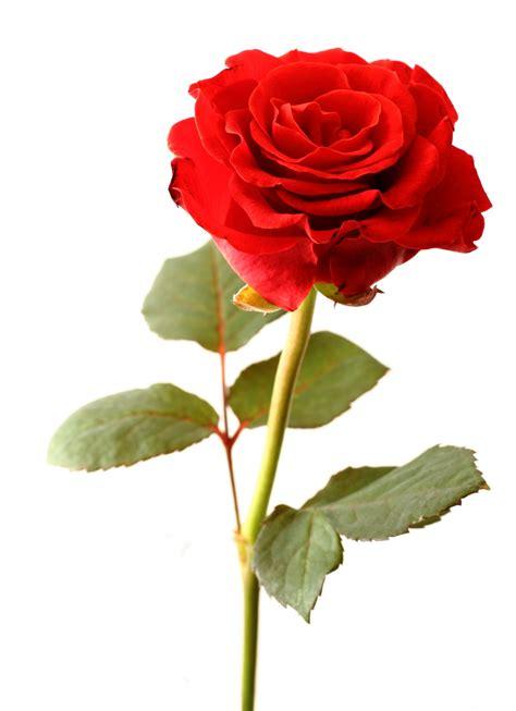 floreros para una flor regalame una flor p 225 gina 15