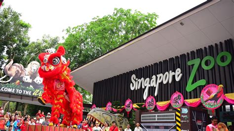 singapore zoo new year 2015 rooster in goat year html autos post