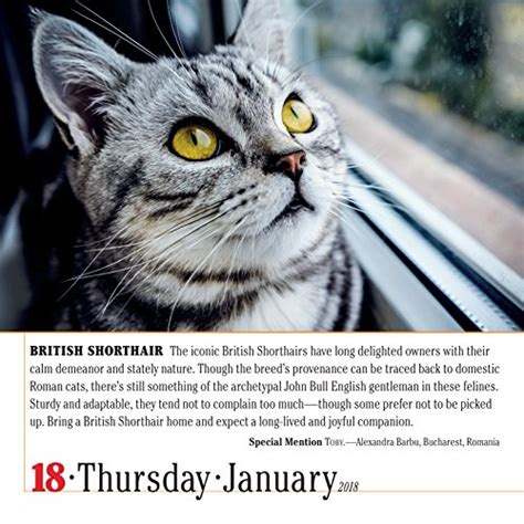 365 cats page a day calendar 1523500794 365 cats page a day calendar 2018 new free ship 1523500794 ebay