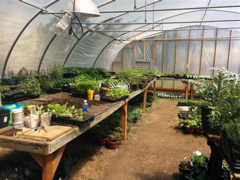 Plant Giveaways - nc nonprofit plans garden plant giveaways the grey area news