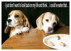 Beagle Meme - cute puppies on pinterest beagles funny dogs and dogs