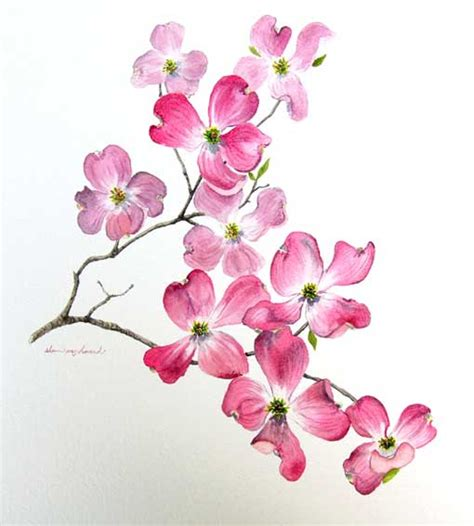 watercolor painting tattoo ideas dogwood flowers