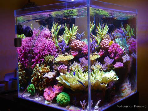 design zeeaquarium reefkeeping magazine august 2014 tank of the month