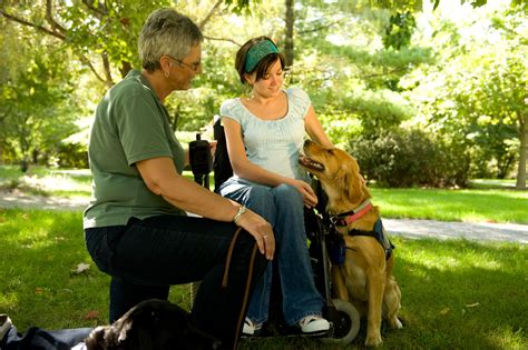 what are service dogs used for service dogs paws with a cause