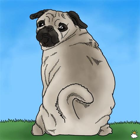 pug owners personality what your s breed says about your personality