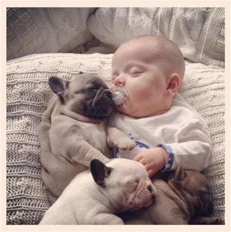 baby bull dogs adorable baby with bulldog puppies 11 pics 1funny