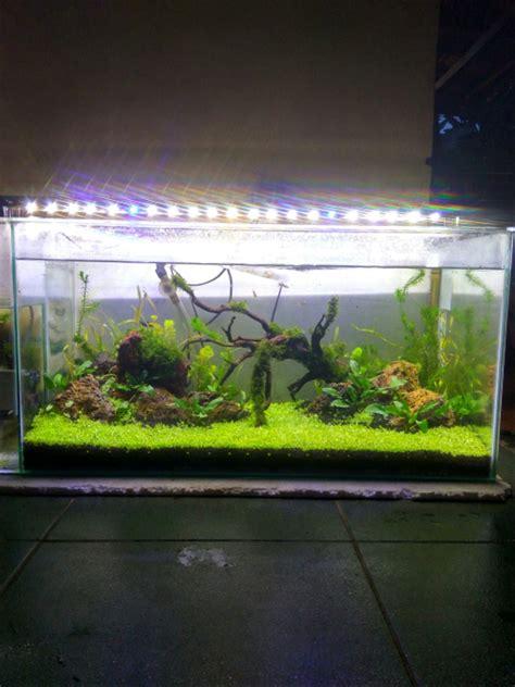jual lampu led aquarium aquascape cm  cm  lapak