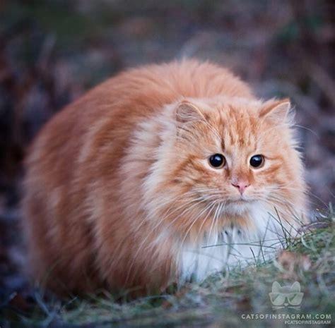 Keranjang Untuk Kucing kucing parsi untuk dijual