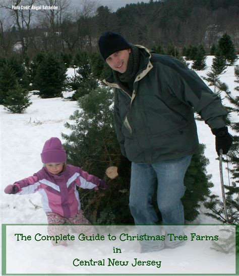 the complete guide to christmas tree farms in central