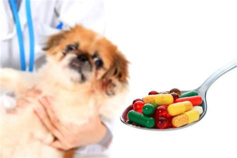 the counter meds for dogs the counter medications that are safe for dogs and how much to give the