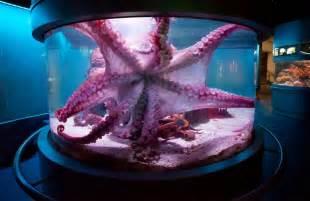 Octopus fish tank fish tanks pinterest
