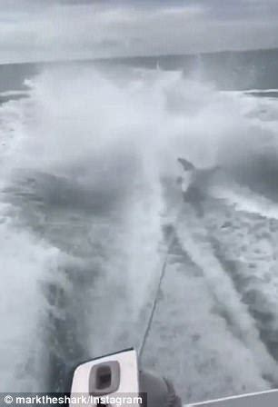 video of shark dragged behind boat investigation launched into men dragging shark behind boat