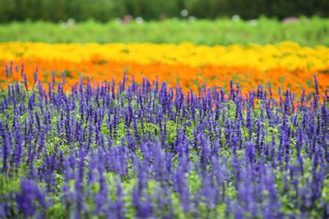 Permalink to japanese garden elements – Japanese Gardens   Elements   Borrowed Scenery