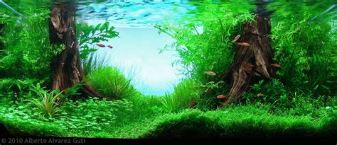 aga aquascaping contest manage your freshwater aquarium tropical fishes and