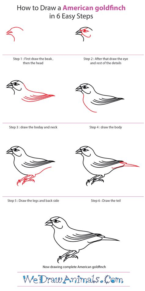 how to draw a goldfinch how to draw an american goldfinch
