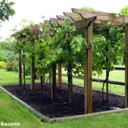 Grape Pergola by Best 25 Grape Arbor Ideas On Pinterest