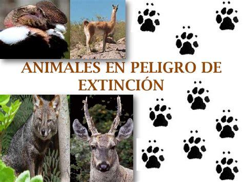 imagenes de animales en extincion animales en peligro de extinci 243 n