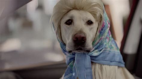 suburu hair salon dog subaru replaces its motorists with dogs that drive in new
