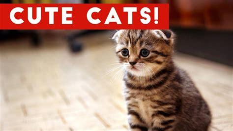 cutest cats compilation   cute cat