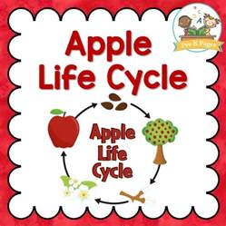 apple life cycle pre k pages