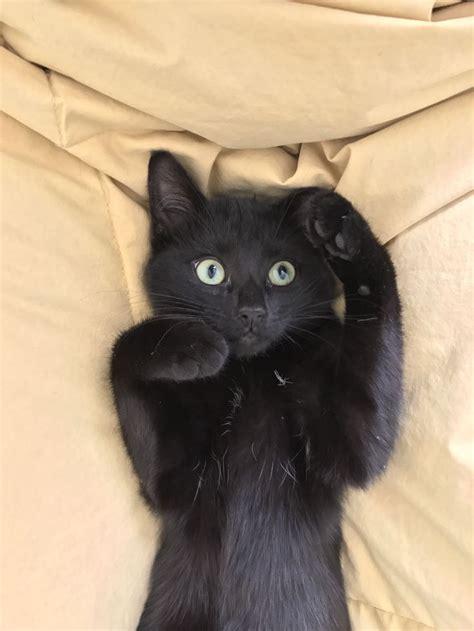 Black Cat best 25 black cats ideas on black