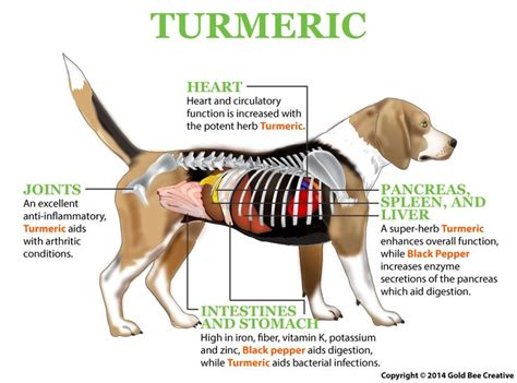 can dogs eat turmeric best 25 cancer ideas on sign of cancer owners and foods dogs can eat