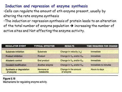 define induction and repression enzymes nearly all the reactions of the are mediated by enzymes ppt