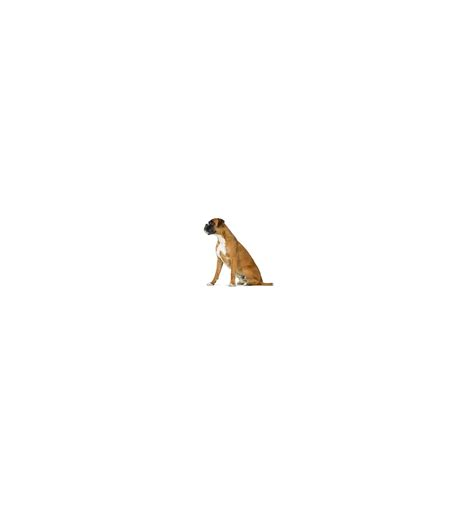 Royal Canin Fibre Response 2kg royal canin veterinary diet royal canin fibre response c 227 o