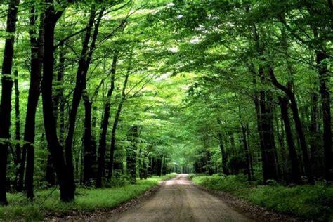 camino verde camino verde 3293