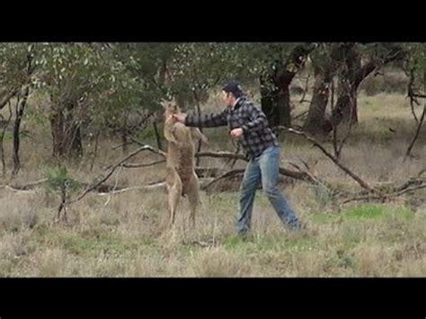 kangaroo with in headlock a punched a kangaroo that had his in a headlock country 104 7 kkrv