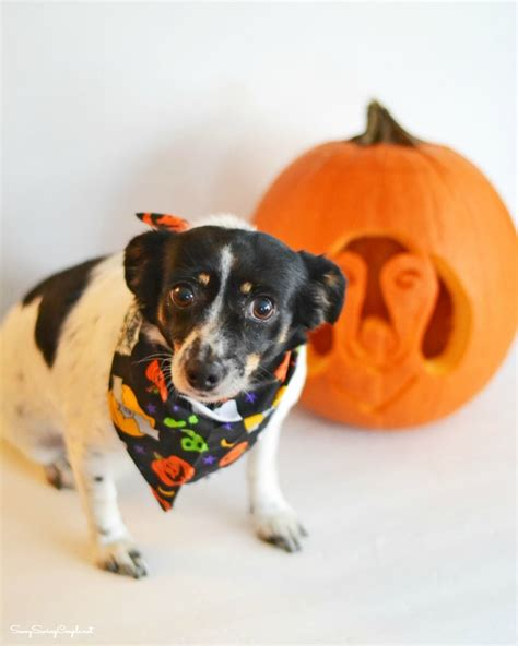 how to get a free puppy how to get free pumpkin carving templates savvy saving