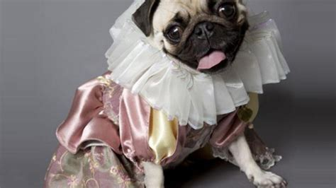 i want a pug pug let the all pug production of hamlet by kevin broccoli kickstarter