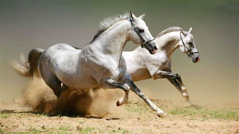 wallpaper for desktop of horses most beautiful horse hd wallpapers pictures images