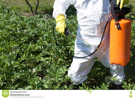 man spraying toxic pesticides or insecticides in vegetable garden stock photo image 75620950