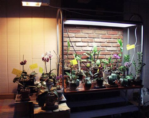 t5 grow lights for indoor plants orchid collection under t5 high output fluorescent and hid