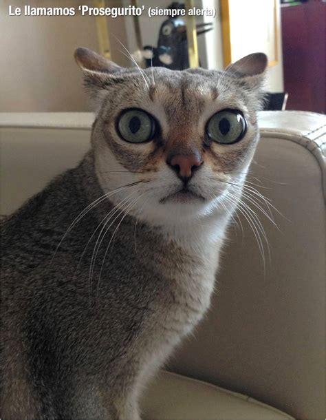 random de imagenes en php random gatos unachicaysugato