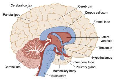 stroke: acute care and rehabilitation all modules