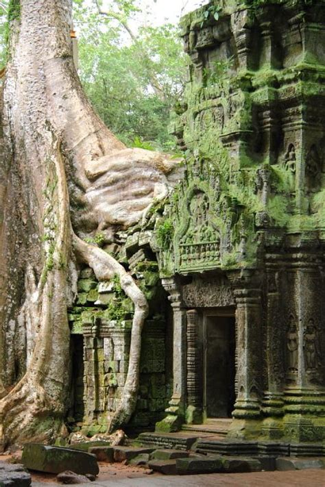 buro tree picture of the day silk tree growing a temple