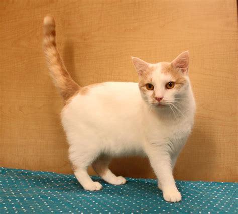 karma puppy rescue karma cat zen rescue society nonprofit in east brunswick nj volunteer read