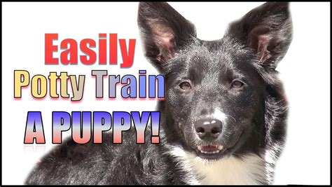 how to house train a dog how to train a puppy puppy training potty house training crate dog breeds picture