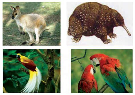 flora dan fauna indonesia keragaman flora dan fauna di indonesia media belajar