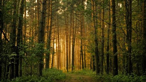 hd wallpapers p forest nice pics gallery