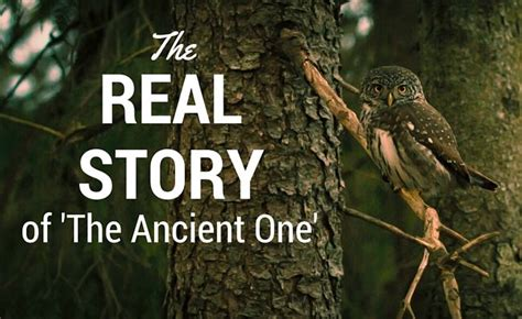on the trail of ancient a narrative of the field work of the central asiatic expeditions classic reprint books the real story of the ancient one tabarron