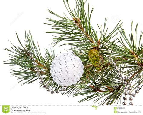 white branch tree fir tree branch with white stock images