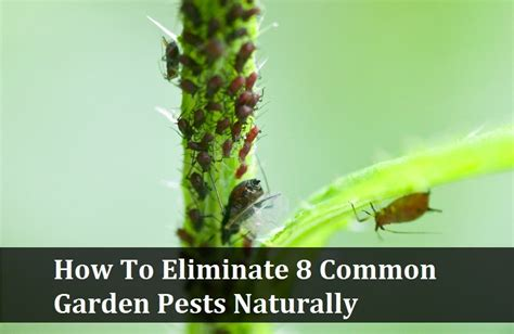 house and garden pest how to eliminate 8 common garden pests naturally