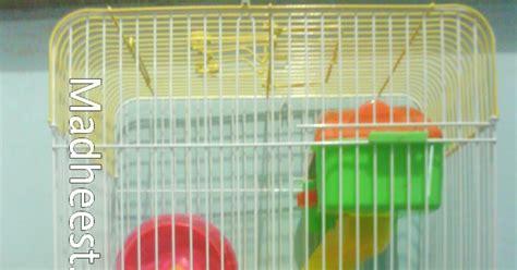 Alas Kandang Untuk Hamster madhee s hamster sugar glider sweet1 kandang hamster 3