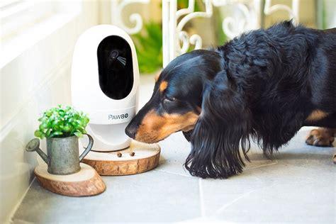 treat dispenser pawbo pet treat dispenser review 187 the gadget flow