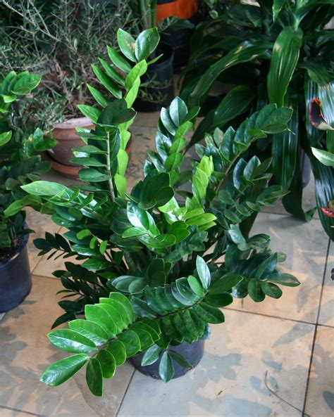 good houseplants for low light top 10 hard to kill house plants low lights and plants
